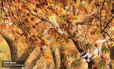 جادوی رنگهای پاییزی