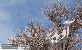 در فصل بهار عصبانیت و استرس را به فراموشی بسپارید
