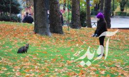 کودکان کرمانی صاحب بوستان اختصاصی می شوند
