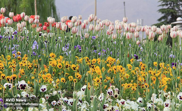 افزایش گلآرایی و زیباسازی شهر در آستانۀ سال نو