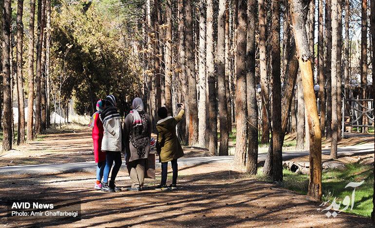 تکذیب قطع درختان برای ساخت قبر در آرامستان کرمان