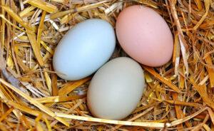 تخم مرغ در مسیر ارزان شدن