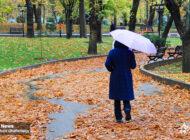 باران، رنگ های پاییزی و رخسار درختان را جلا داد + عکس